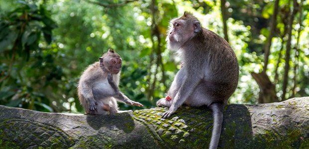 Famous Ubud Monkey Forest img